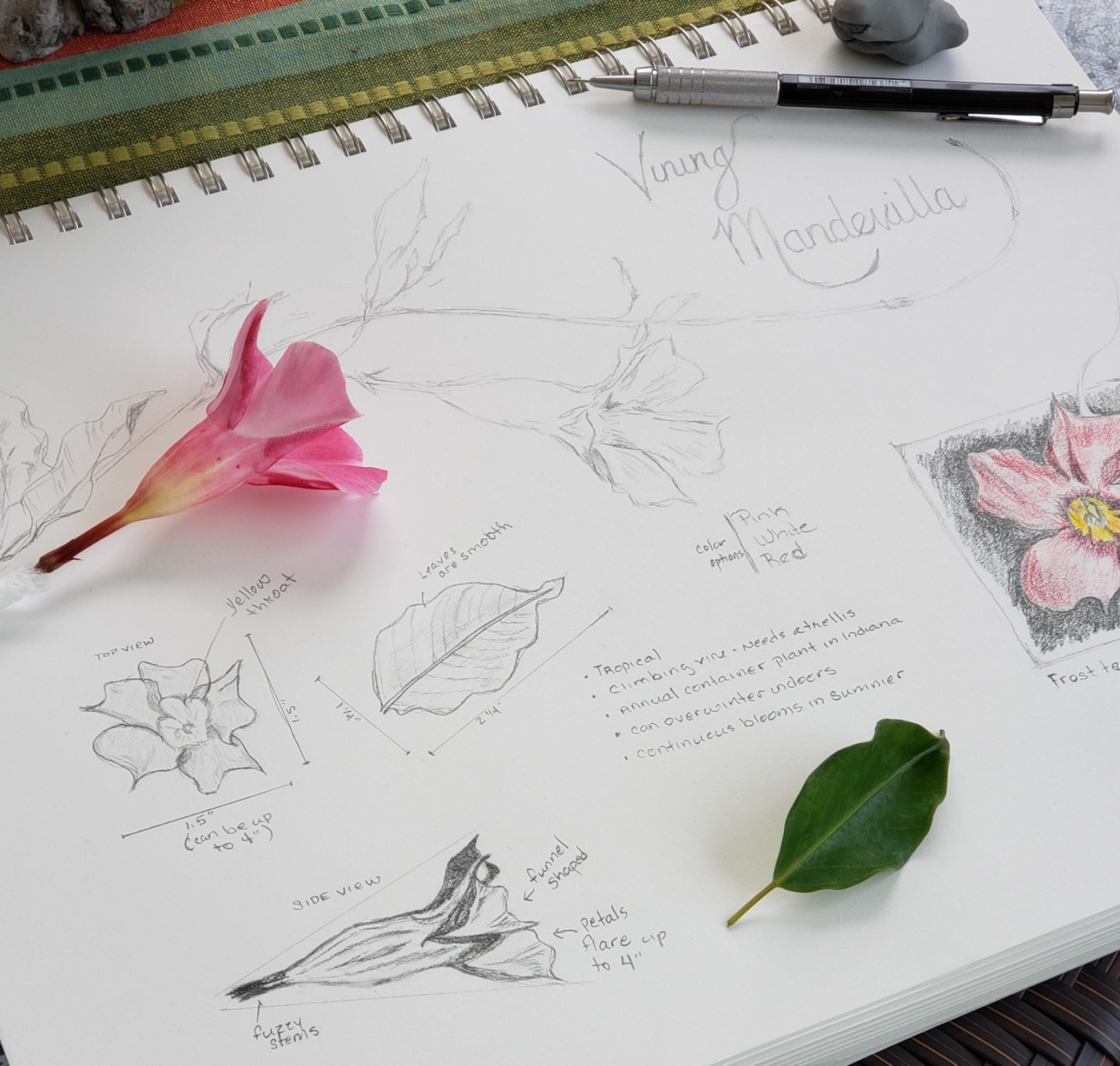Week 4 Flower Garvin